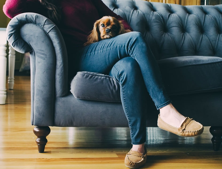Couch, Feet, Shoes, Wooden, Floor, Dog, Puppy, Brown